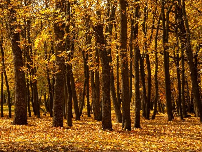 Webbinarium: Kompetensglapp och vanans makt försvårar träbyggnation