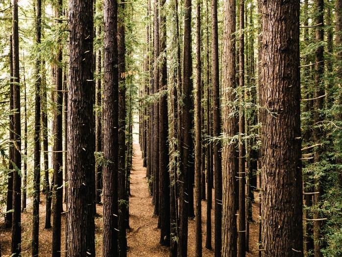 Kan konsumtionen bli klimatneutral genom kompensation?