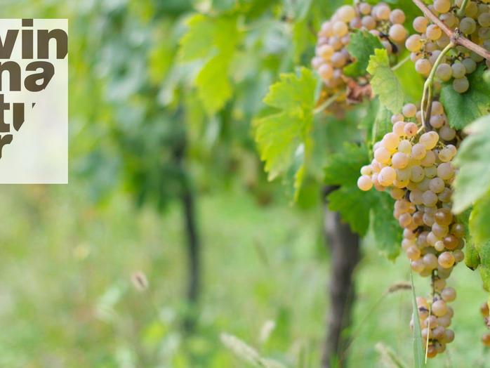 Defekta viner för modiga vinprovare!